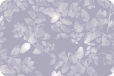 Papilio transparent